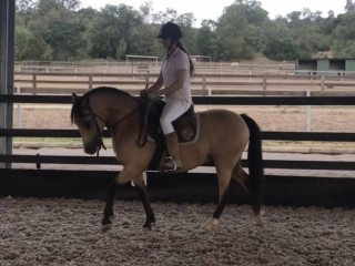 Chromed Wheels, 2007 Chestnut 14h AQHA gelding for adoption