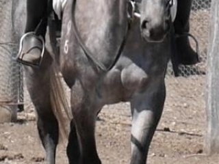 STERLING: BOMBPROOF CONFIDENCE BOOSTER/BEGINNERS H