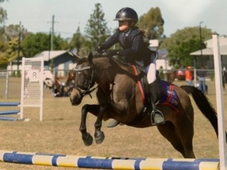 Perfect Interschool Pony For Sale