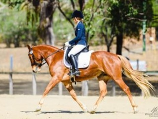 Ultimate Small Dressage Mount
