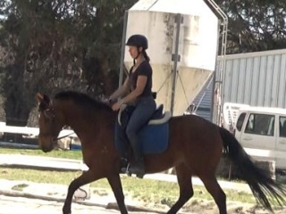 SUPER TEMPERAMENT - 6yo TB mare