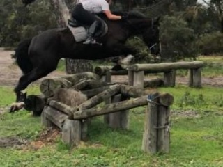 Proven Pony club mount, Potential Eventers dream