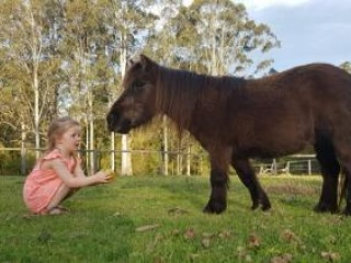 A Mothers Dream Pony!!!!