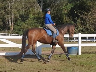 Reliable Wb Mare