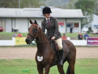 Young Event Horse