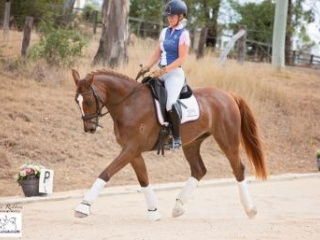 Dressage in Queensland