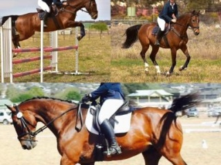 Experienced kind eventer
