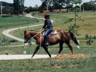 Young stockhorse mare