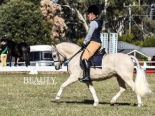 Nattini Prince Harry ** 6yr old super kids pony