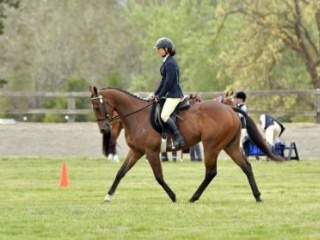 """Wherever Hugo"" 4yo TB 15.1hh"