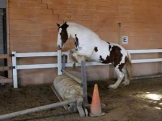 Clydesdale cross shire mare