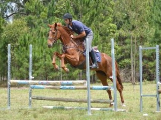 """Perfect Pony Club Mare """"Gee Gee"""""""