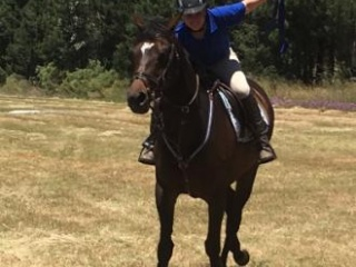 Been there done that - athletic mare