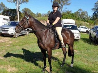 Brown thoroughbred gelding