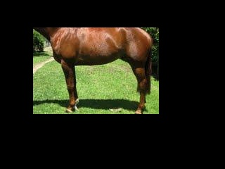 Escudo mare in foal to Contenda