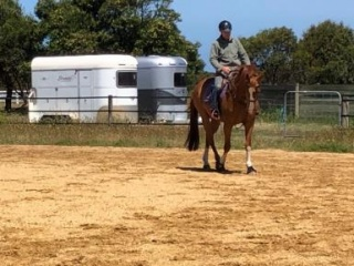 Lovely Dressage Gelding