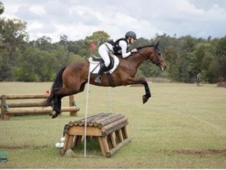 Competitive & Talented eventer