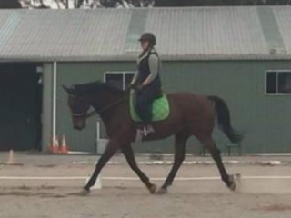 Safe/fun/talented all-rounder for free lease