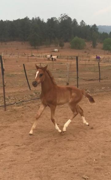Warmblood mare with gorgeous filly foal