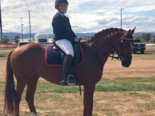 Ultimate Allrounder and Interschool Horse