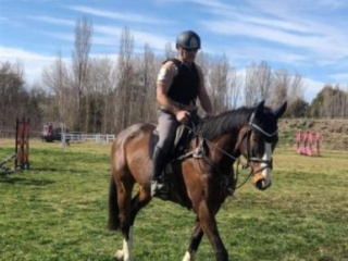 Eventing, SJ or Dressage prospect with bling