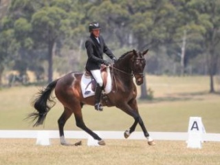 Very competitive 2* Eventer