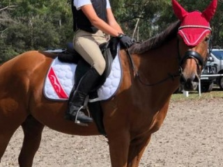All rounder project horse