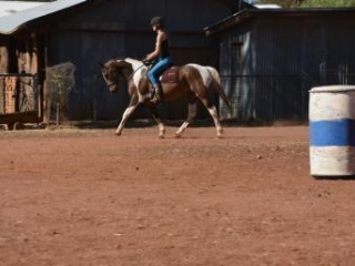 Lovely, kind family horse-Pinto gelding
