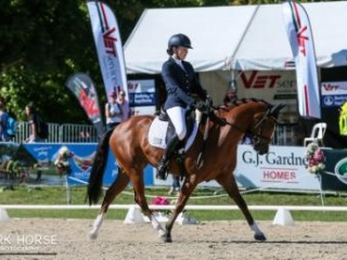 Superstar Dressage Pony