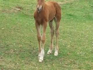 Outstanding colt by Total Hope/Benicio