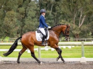 Dressage, Show Horse or Breed!