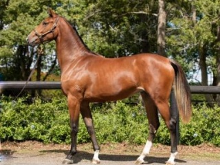 Stunning WB Filly