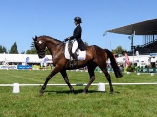 Talented 4* eventer with an amazing record