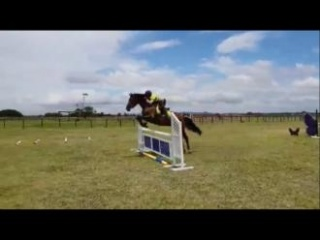 Wb mare suited to the highest levels of eventing