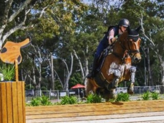 Extremely Scopey 3* Eventer/Showjumper