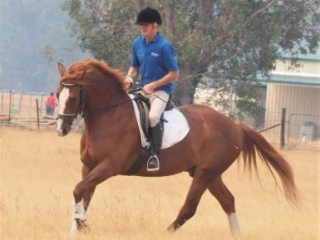 Dressage or show prospect