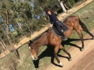 Pleasure/Trail Riding Gelding