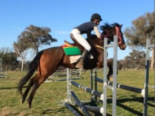 10 year old TB gelding for sale