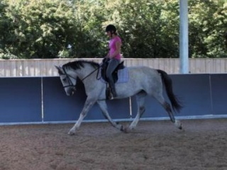 Purebred IDSH proven broodmare/riding/alrounder