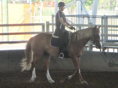 Horses in Queensland