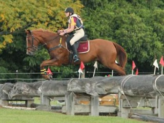 FANTASTIC JUNIOR'S EVENTER /SHOWJUMPER
