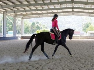 Price reduced !! Talented 6 yo Warmblood Mare