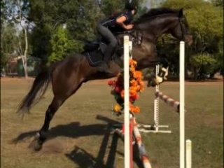 Ollie- 8yo gelding eventer/ showjumper /all round