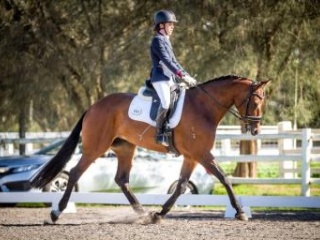 Extremely Competitive Dressage Horse!