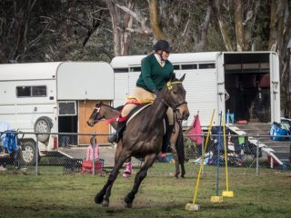 Quick and pretty stock horse gelding, suit sporting, dressage, endurance