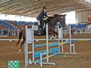 FANTASTIC CHILD'S/TEEN'S EVENTER /SHOWJUMPER