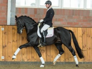 Eye-catching Dressage Gelding by Desperados - De Niro