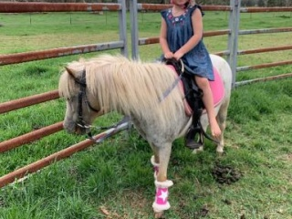 Trust worthy first on lead or first pony