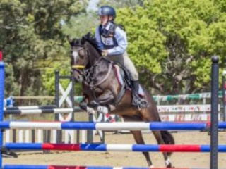 Competitive show jumping pony