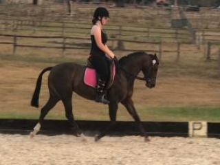 Beautiful Riding Pony Mare - 13hh, 11 years